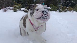A Pair of Powder Pups || ViralHog