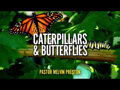2018-06-23 | Pastor Melvin Preston | Caterpillars And Butterflies