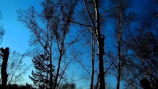 Как правильно пилить ветки(Если ветка высоко и с земли не достанешь - вам поможет: бензопила, веревка, лестница. не забудьте страховочны..., 2015-05-05T07:16:55.000Z)