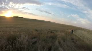 Scobey Montana Hungarian Partridge And Sharptail Grouse 2015