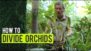 How to: Divide Orchids