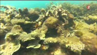 carnet de voyage d'envoye special - Grande barrière de corail Août 2013