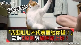 「朕翻肚肚不是要給你摸!」掌握5原則讓貓咪更愛你!