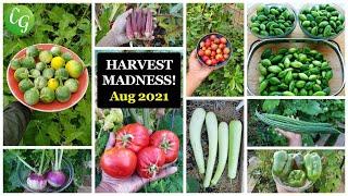 Vegetable & Fruits Harvest Madness! California Gardening Garden Tour, Harvests, Gardening Tips!