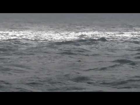Beautiful Florida Ocean Waves. Singer Island. Palm Beach Shores. End Of Atlantic Hurricane Season.