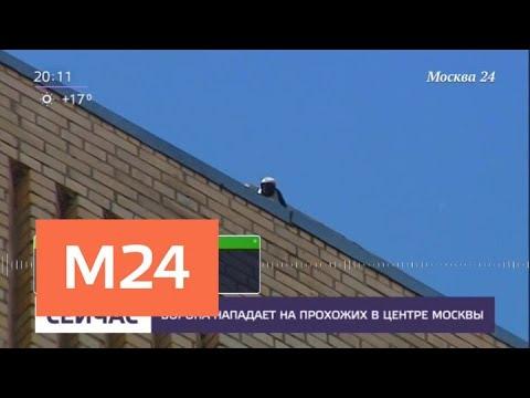 Ворона напала на женщину в центре Москвы - Москва 24