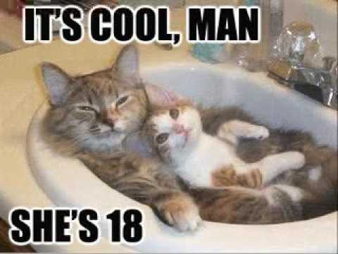 Really Funny Pictures With Words Very Funny Cats...
