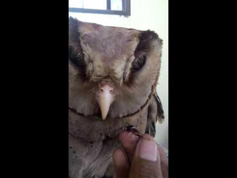 Latihan manning Oriental Bay OWL