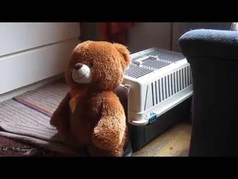 Dog Stuffs Teddy Bear Into Kennel