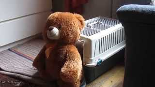 Dog Stuffs Teddy Bear Into Kennel