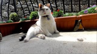 Funny cat talking and singing