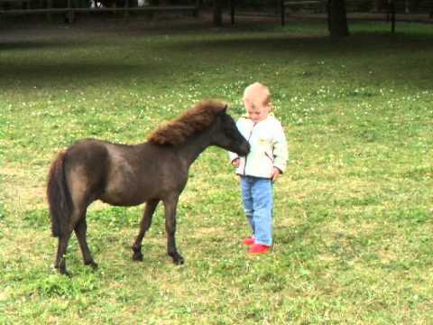 Worlds Smallest Horse Breed