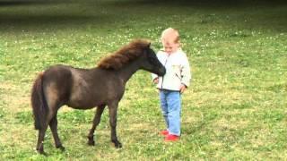 Honey, I Shrunk The Horse! Falabella Miniature Horse...