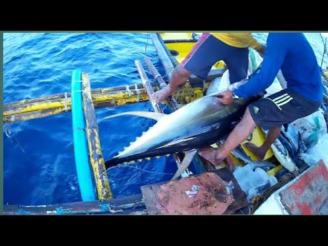 AMAZING TRADITIONAL TUNA FISHING In The  PHILIPPINES | MONSTER TUNA! | Filipino Tuna Fishing