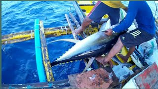 Download AMAZING TRADITIONAL TUNA FISHING in the  PHILIPPINES | MONSTER TUNA! | Filipino tuna fishing Mp3 and Videos