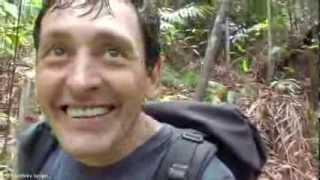 Встреча в джунглях Калимантана редчайшего медведя бируанга.