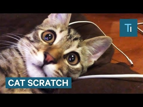 What To Do If You Get Scratched By A Cat