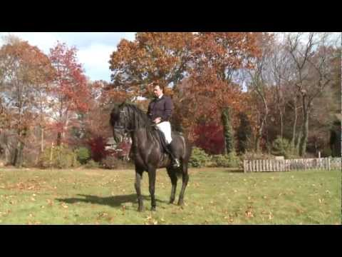 781-385-0852 Boston-Andalusian Horses For Sale-Best Pure Spanish Horses Lincoln, Masschusetts
