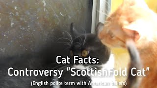 Cat Facts: Controversy 'ScottishFold Cat' (English polite terms with American beliefs)
