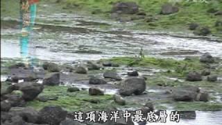 大愛新聞_發燒海洋_小小藻類功用多 生質能源明日之星