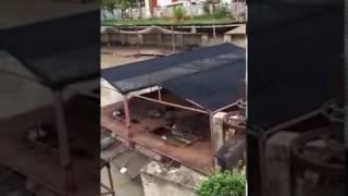 アユタヤ カメ 亀 タイ Pra Nakorn Si Ayutthaya