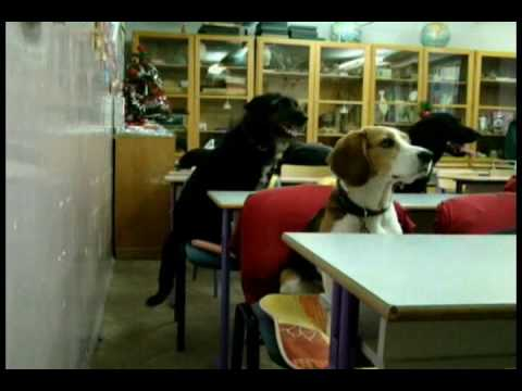 Egy nap a kutyasuliban - A day at the dog school
