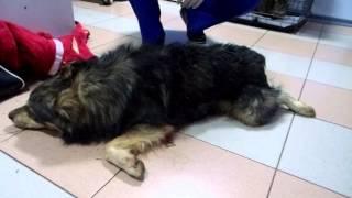 Сбитая собака возле ГАИ.