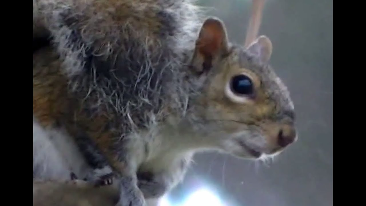 What Sounds and Noises Do Squirrels Make And What Do They Mean?