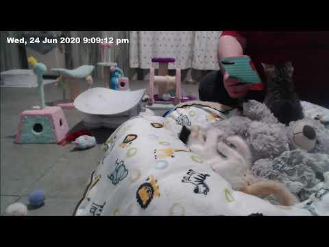 Foster s Home for Imaginary Friends Se1 - Ep03 House of Bloo s (3) - Part 07Kaynak: YouTube · Süre: 2 dakika1 saniye