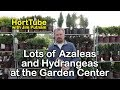 Azaleas, Hydrangeas, and Containers Ideas at the Garden Center