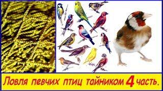Ловля певчих птиц тайником 4Часть 2017 - Новый тайник 4Х2.40