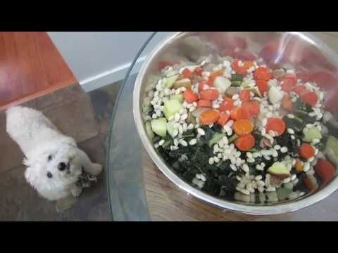 dr-bens-vegan-dog-food-recipe