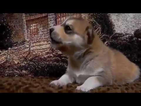 狗狗视频大全搞笑_2016 狗狗搞笑片 - YouTube