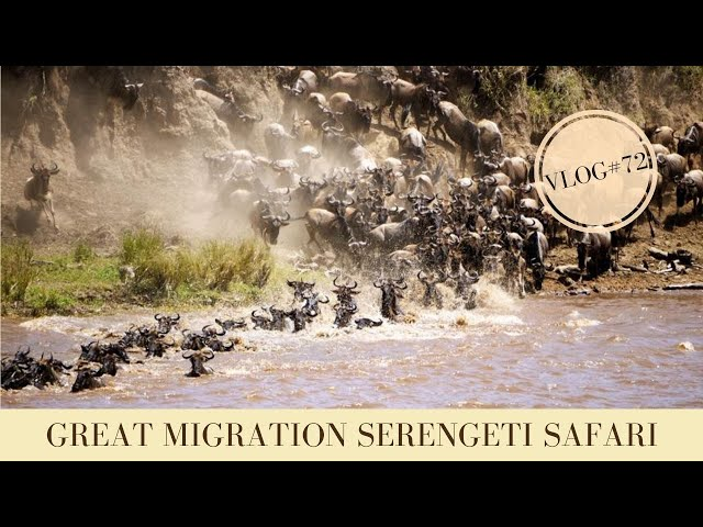 Great Migration Tanzania Safari Serengeti | Makasa Tanzania Safari | VLOG #72