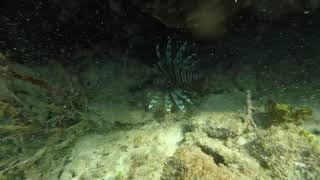Lion Fish Hunting in Grand Cayman