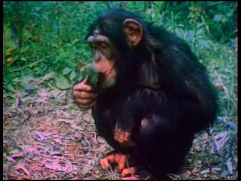 Мультфильм обезьяний остров