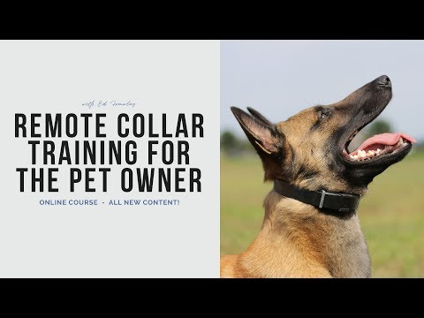 remote-collar-training-for-the-pet-owner---online-course
