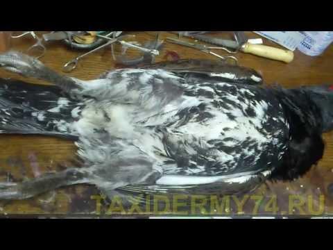 Изготовление чучела совы самостоятельно видео