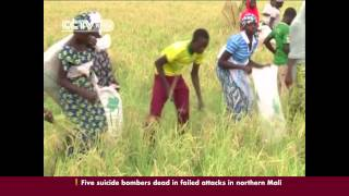Chinese government provides high quality rice seeds to Nigeria's Kebbi state