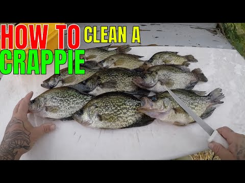 HOW TO CLEAN A CRAPPIE
