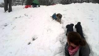 Sledging Border Terrier Style