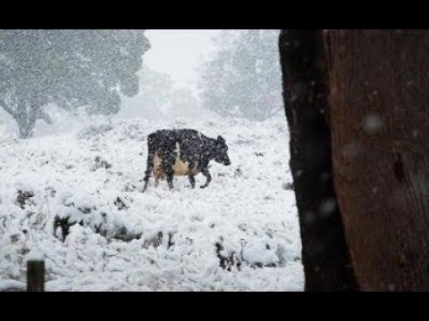 Australian Ski Fields & ThunderSnow: Global Cooling has Begun (453)