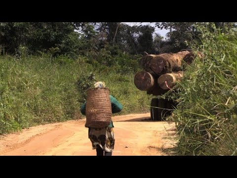 In Gabon, villagers angry at logging companies