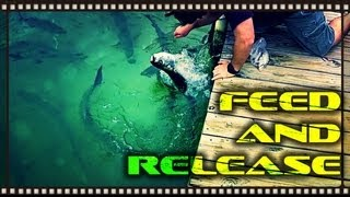 "Florida Keys Tarpon ""Feed and Release"""
