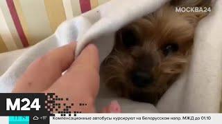 Москвичи показали, как согревают своих домашних животных - Москва 24