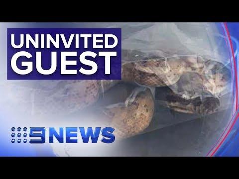 New Pet Owners Get A Surprise Bonus Python | Nine News Australia