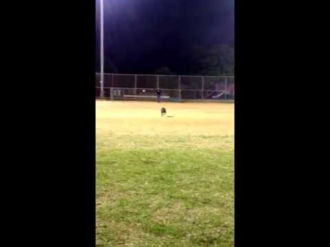 Australian Cattle Dog mix running across a field upon command (Houston, Tx)