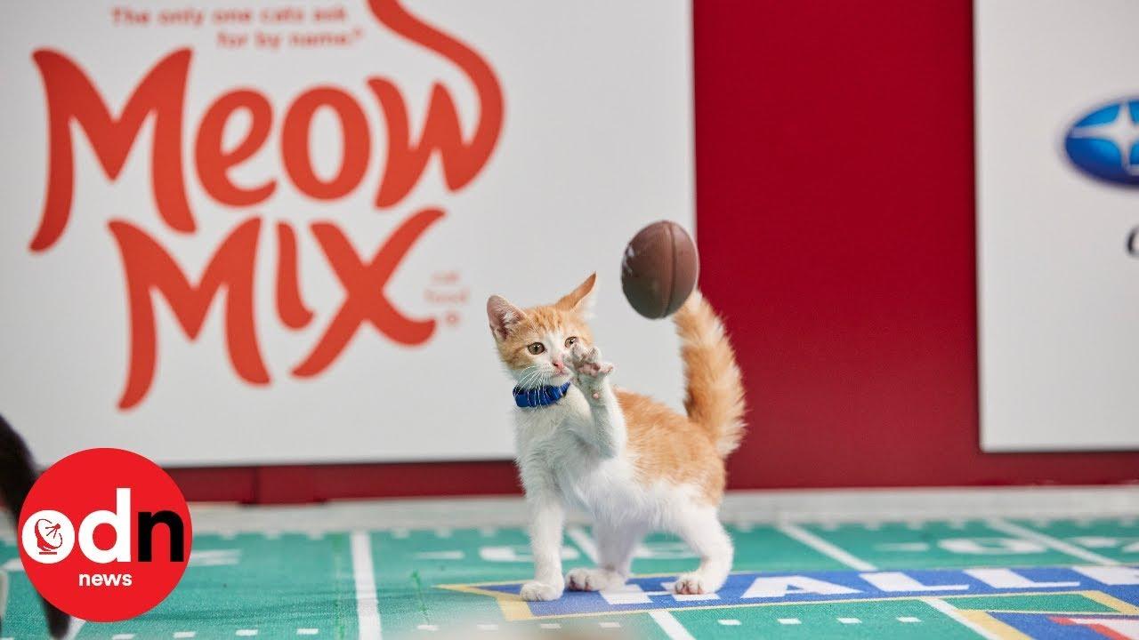Kitten Bowl The Purr Fect American Football Alternative Youtube