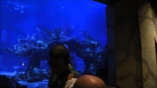 Coral Reef Restaurant, Epcot, Walt Disney World