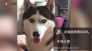 【抖音】熊猫来了!2018最新动物视频合集 (10)TIK TOK Panda 超治愈系